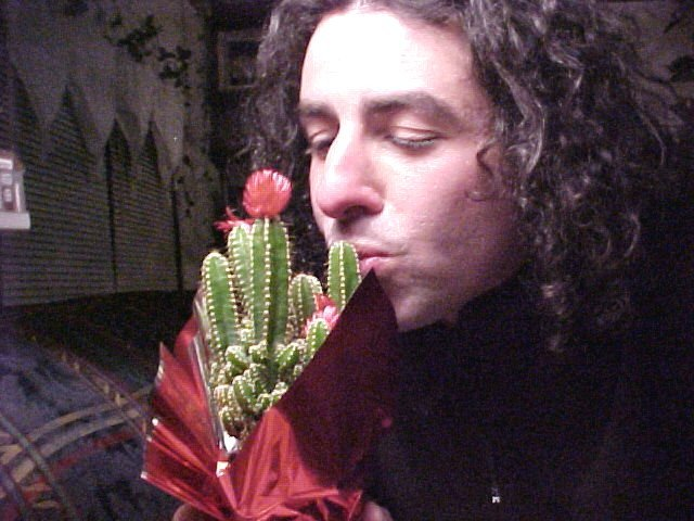 Kissing a Christmas Cactus