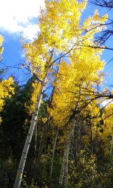 Colorado Autumn Leaves