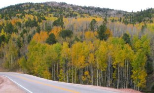 Teller County Fall Foliage