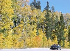 Colorado Autumn Foliage