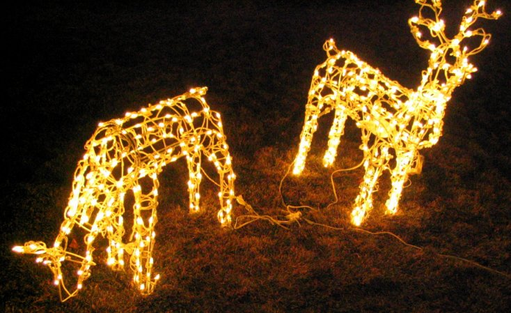 Christmas lights pictures in colorado